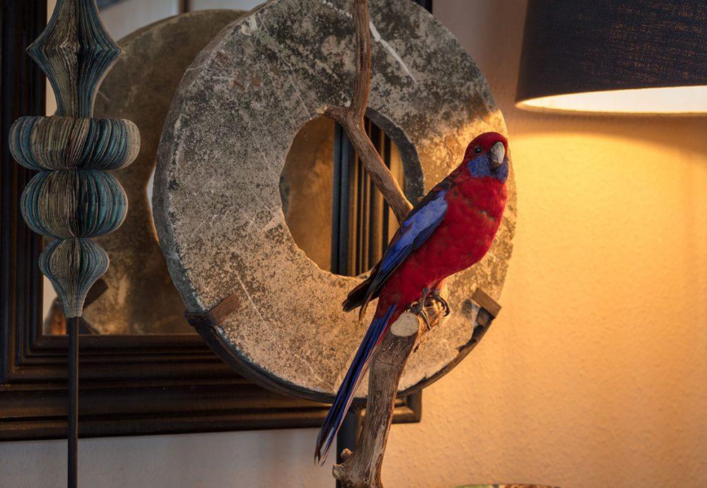 huis-oudegein-papagaai-vergaderlocatie-utrecht